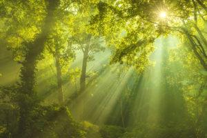 Sun Woods